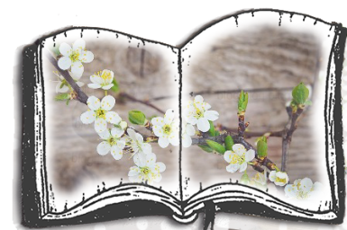 cherry-blossoms-1389798_960_720.png