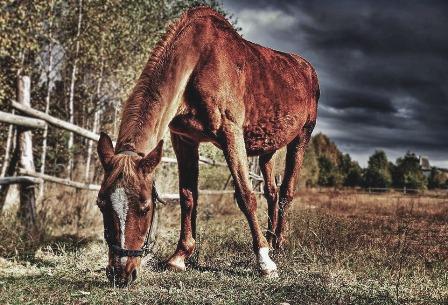 horse-1322198_960_720.jpg