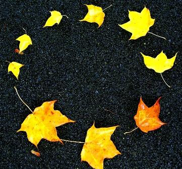 leaves-2506072_960_720.jpg