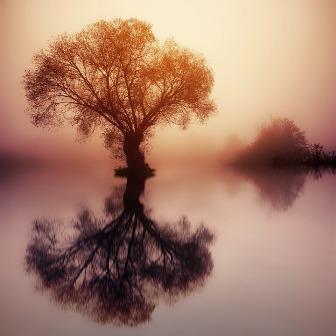 arbre et reflet