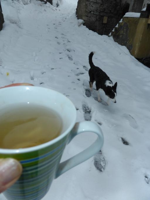 promener son chien hiver