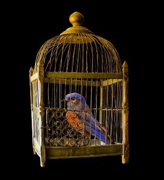 cage-1226738_960_720.jpg