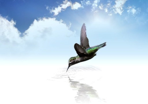 UNE-colibri eau.jpg
