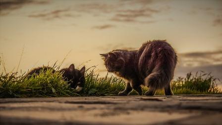 cats-3061372_960_720.jpg