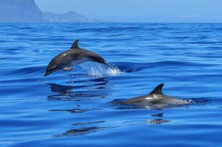 dolphin-pixabay