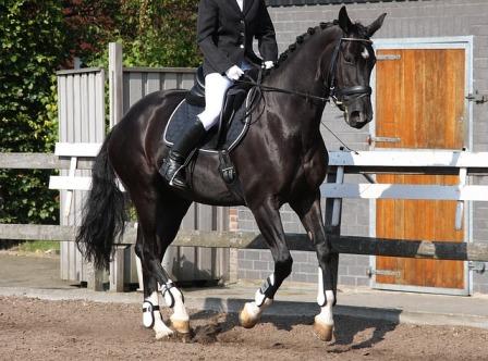 equestrian-1308457_640