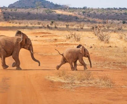 safari-4043090_640