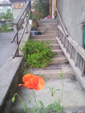 coquelicot dans l'escalier